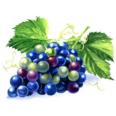 Sticker Aquarell Haufen von blauen Trauben