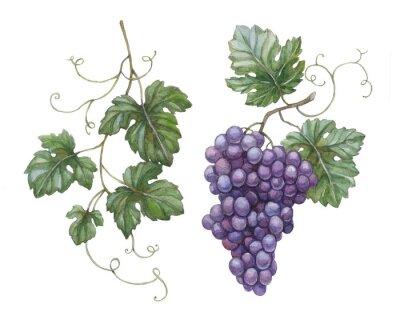 Sticker Aquarell-Illustration von Trauben mit Blättern