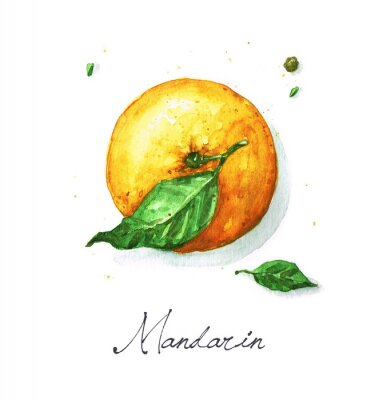 Sticker Aquarell Lebensmittel Malerei - Mandarine oder Orange