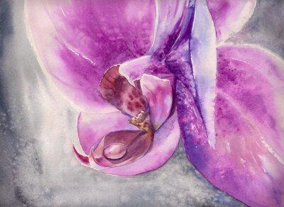 Sticker Aquarell panting rosa Orchidee Blume mit kleinen Wassertropfen.