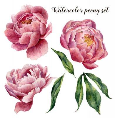 Sticker Aquarell-Pfingstrosen-Set. Vintage floral Elemente mit Pfingstrose Blumen und Blätter isoliert auf weißem Hintergrund. Hand gezeichnete botanische Illustration für Design