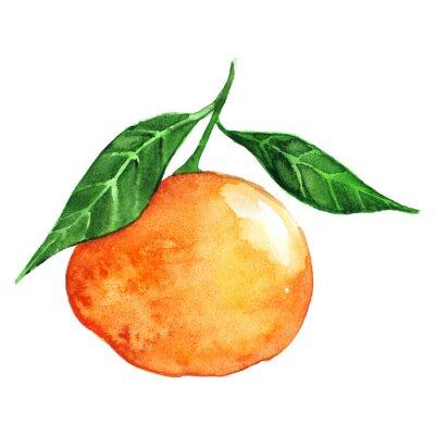 Sticker Aquarell reif orange Mandarine Zitrusfrüchte isoliert