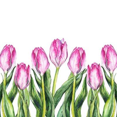 Sticker Aquarell rosa Tulpe Blume Natur Grenze Rahmen