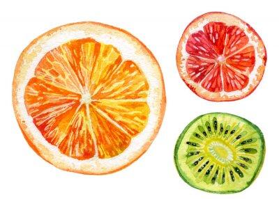 Sticker Aquarell-Set von frischen Orangen, Kiwi und Grapefruit
