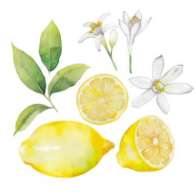 Sticker Aquarell Zitrone Sammlung