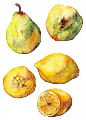 Sticker Aquarell Zitrone Zitrusfrüchte Birnen Obst isoliert