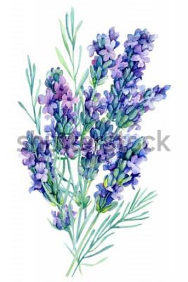 Sticker Aquarellblumenstraußlavendel blüht Illustration auf lokalisiertem weißem Hintergrund