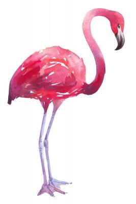 Sticker Aquarellillustration eines Flamingo