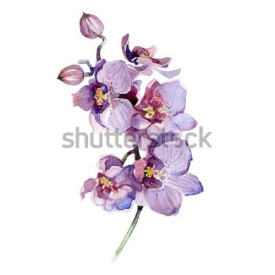 Sticker Aquarellorchideenblumenstrauß lokalisiert auf weißem Hintergrund.