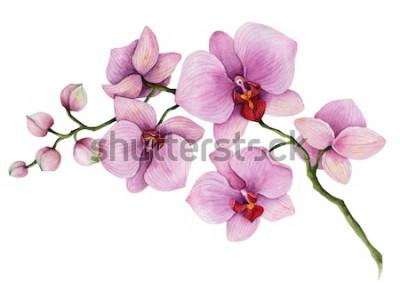 Sticker Aquarellorchideenniederlassung, Hand gezeichnete Blumenillustration lokalisiert auf einem weißen Hintergrund.