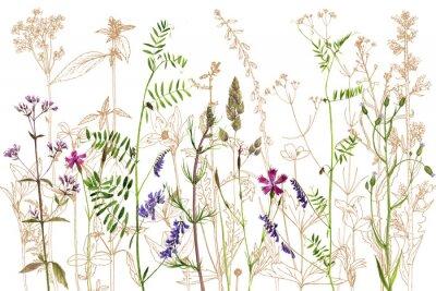 Sticker Aquarellzeichnung Blumen und Pflanzen