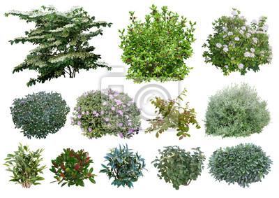 Sticker Arbustes
