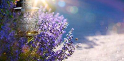 Sticker art Sommer oder Frühling schöner Garten mit Lavendelblüten