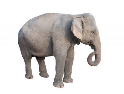 Sticker asia Elefanten