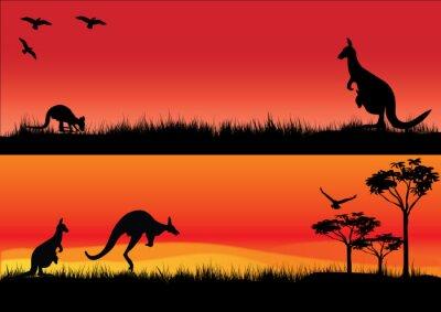 Sticker Australian Kangaroos in the sunset