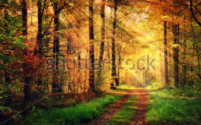 Sticker Autumn forest scenery with rays of warm light illumining the gold foliage and a footpath leading into the scene