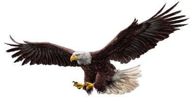 Sticker Bald Eagle fliegen zeichnen und malen auf weißem Hintergrund Vektor-Illustration.