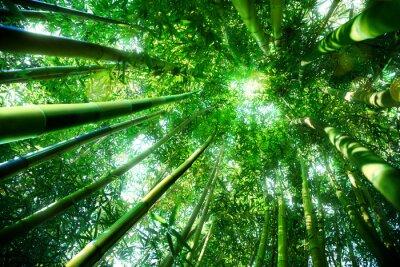 Sticker bamboo forest - zen concept