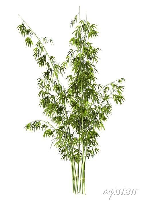 Sticker Bambus-Baum