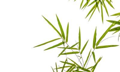 Sticker Bambus-Blätter isoliert auf weißem Hintergrund, Clipping-Pfad einschließlich