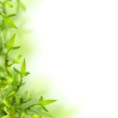 Sticker Bambus und grüne Blätter, Hintergrund