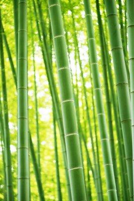 Sticker Bambuswald