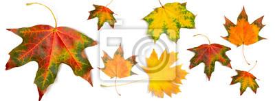 Sticker Banner Herbst Muster Ahornblatt hell auf weißem Hintergrund