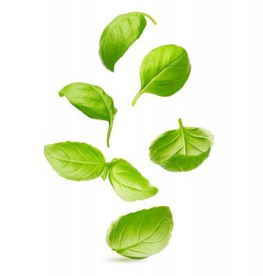 Sticker Basil leaves spice closeup