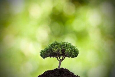 Sticker Baum im Vordergrund