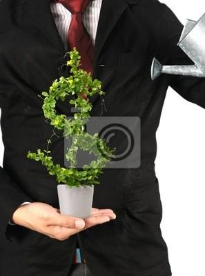 Baum mit Dollar isoliert
