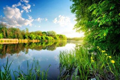 Sticker Bäume durch ruhigen Fluss
