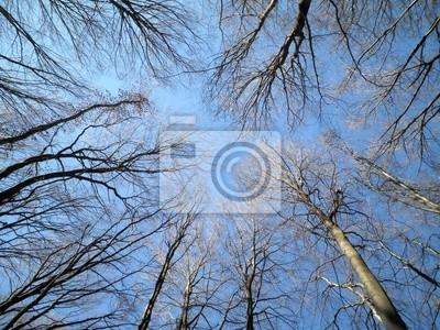 Bäume mit blauer Himmel