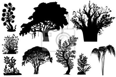 Bäume von Afrika
