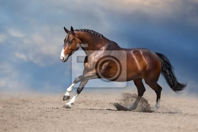 Bay horse run gallop on desert sand against blue sky