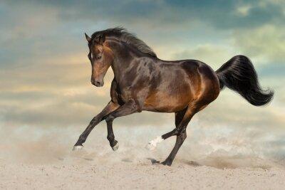 Bay stallion run on desert dust against dramatic background