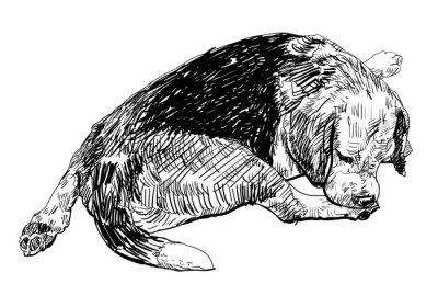 Sticker Beagle ist sanft beißt auf ihr Bein.