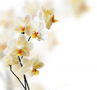 Sticker Beautiful white orchid