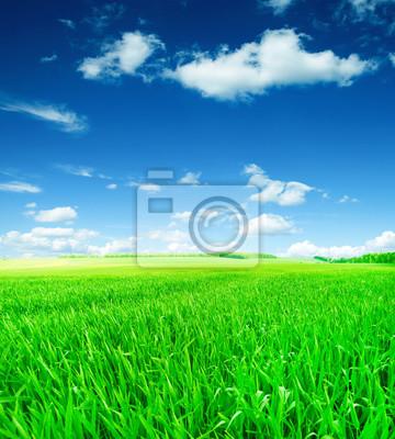 Bereich des Grases und perfekten Himmel
