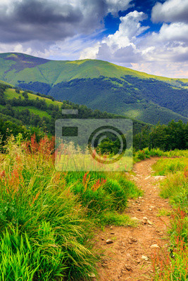 Bergpfad im hohen Gras