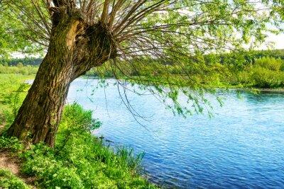 Sticker Big alten Baum am Ufer des Flusses
