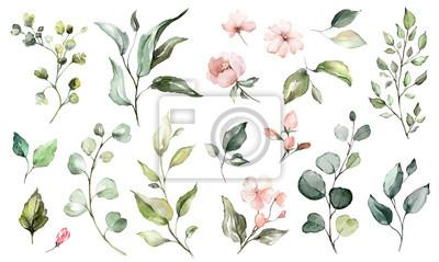 Big Set Aquarell Elemente - Wildblumen, Kräuter, Blatt. Sammlung Garten und Wild, Waldkraut, Blumen, Zweige. Illustration lokalisiert auf weißem Hintergrund, exotisches Blatt. Botanisch