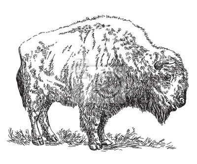 Bison Vektor Hand Zeichnung Illustration