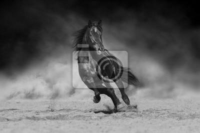 Black stallion run on desert dust against dramatic background. Black and white