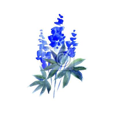 Blaue Lupine. Aquarellabbildung. Isoliert auf weißem Hintergrund.