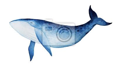 Blauwal-Aquarellillustration. Geist Tier, Totem, Weisheitshalter, Geschichtsbewahrer, friedliche Stärke, innere Wahrheit, Kreativität, emotionale Wiedergeburt. Übergeben Sie gezogene Malerei, lokalisi