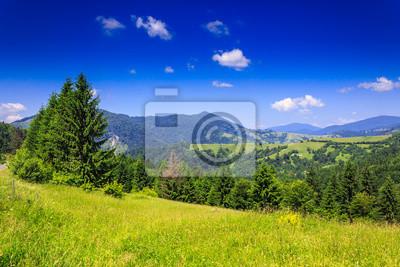 Blick auf die Berge von grünen Wiese im Sommer