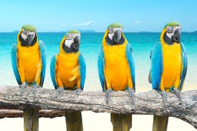 Sticker Blue and Gold Macaw auf tropischen schönen Strand und Meer