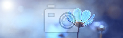 Sticker Blue beautiful flower on a beautiful toned blurred background, border. Delicate floral background, selective soft focus.