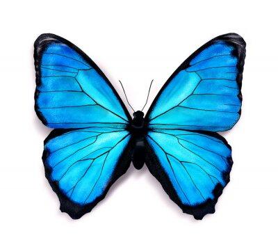 Sticker Blue butterfly