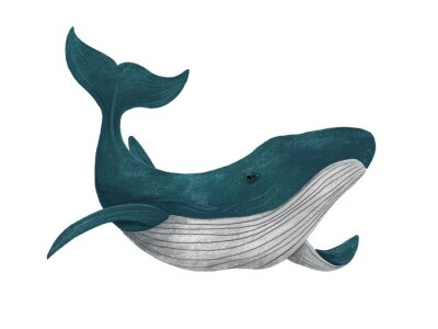 Blue whale. Cute illustration on white isolated background